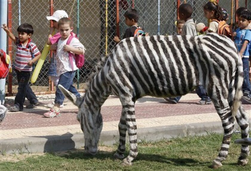 Palestinian children visiting the Marah Land Zoo outside Gaza City look at a donkey painted in a zebra-like pattern,Thursday, Oct . 8, 2009. Zoo keepers have found a creative way to draw crowds to the Gaza zoo that suffered losses during the war with Israel. Zoo workers replaced 2 zebras that died