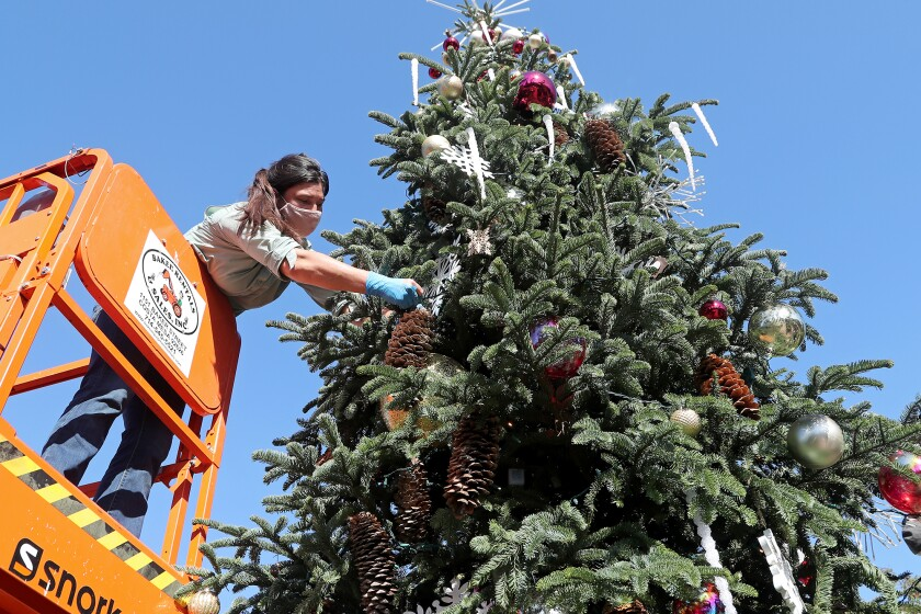 Erin Aguilar, manager horticulturist, hangs a pine cone as she helps decorate a 24-foot-tall Christmas tree.