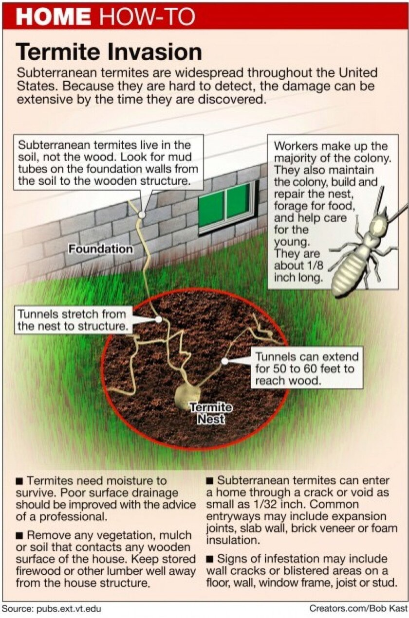 Here S How Continue Termite Treatment Or Not The San Diego Union Tribune