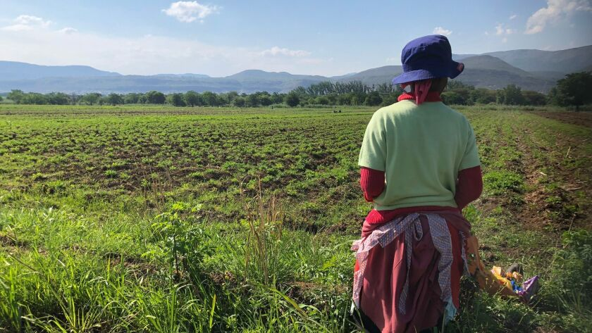 A woman takes a break on the side of a field. The government purchased this land from a white farmer