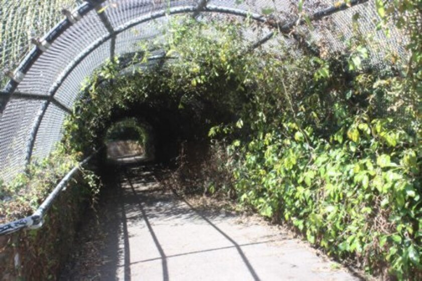 The Torrey Pines Road pedestrian bridge in the Village (pictured in March) was overgrown with vines that created a semi-private enclave appealing to homeless people.