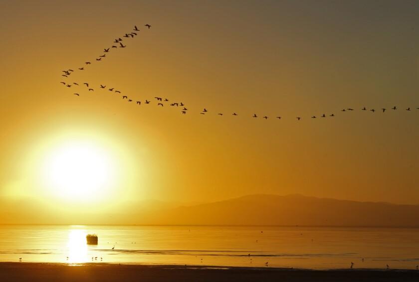Ducks fly over the Salton Sea.