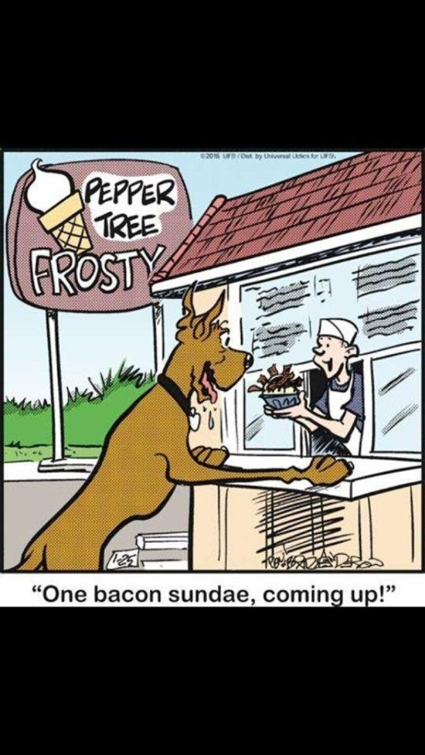 """Vista's Pepper Tree Frosty shop was featured in Monday's """"Marmaduke"""" comic panel. In this comic published Jan. 25, the caption reads """"One bacon sundae, coming up!"""""""