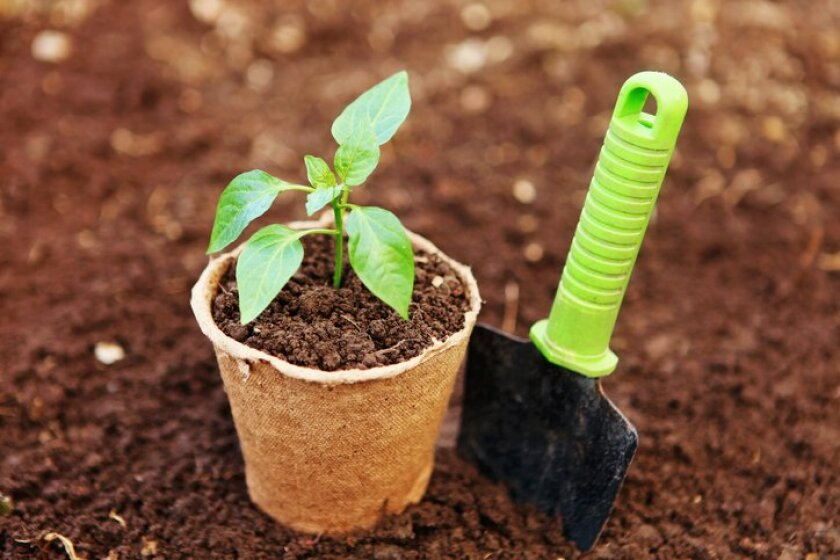 April is the perfect time to plant summer vegetables, such as pepper plants.