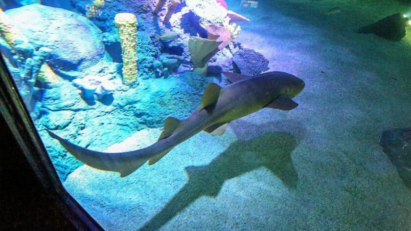 Shark Week? Here's the real news about sharks in Southern