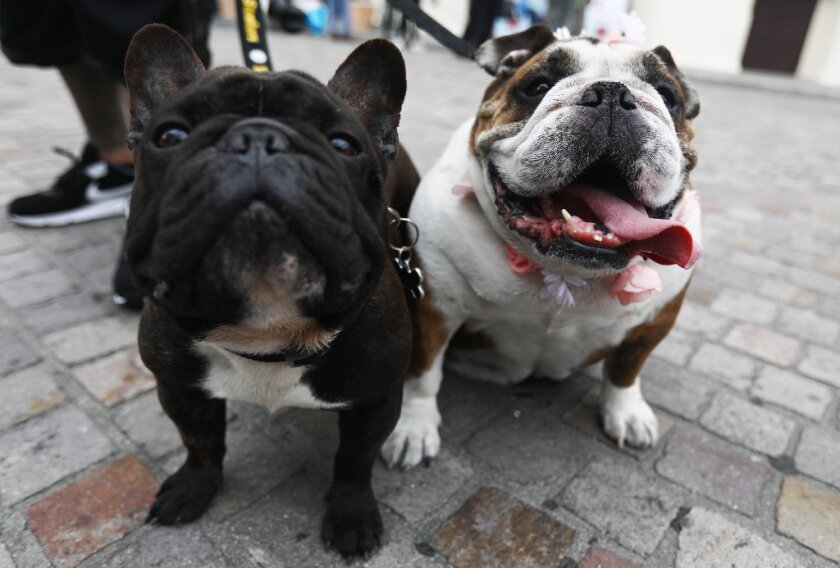 dogs posing.JPG