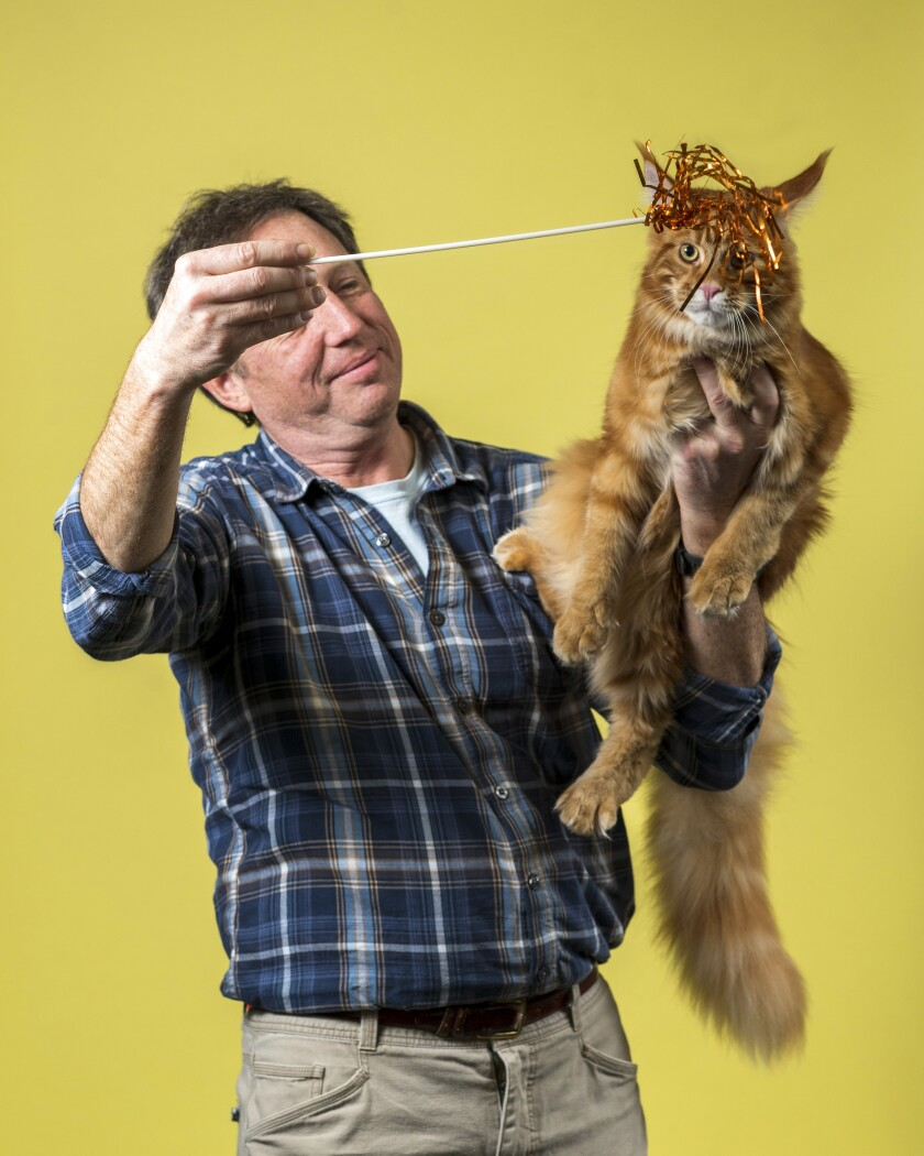 Jeff Muss holds his Maine Coon named Caesar and a toy with ribbons on a stick in front of the cat.