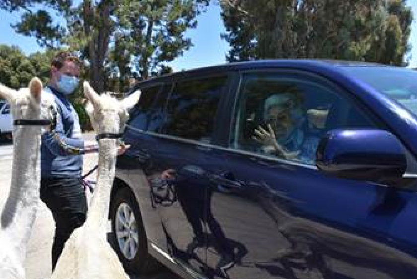 Kronk and Kuzco greet clients from Alzheimer's San Diego.