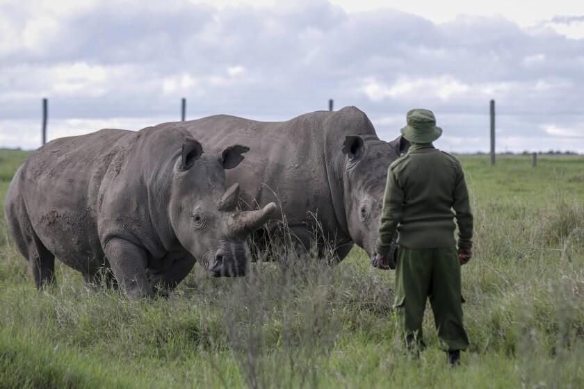 Virus Outbreak Poaching Kenya
