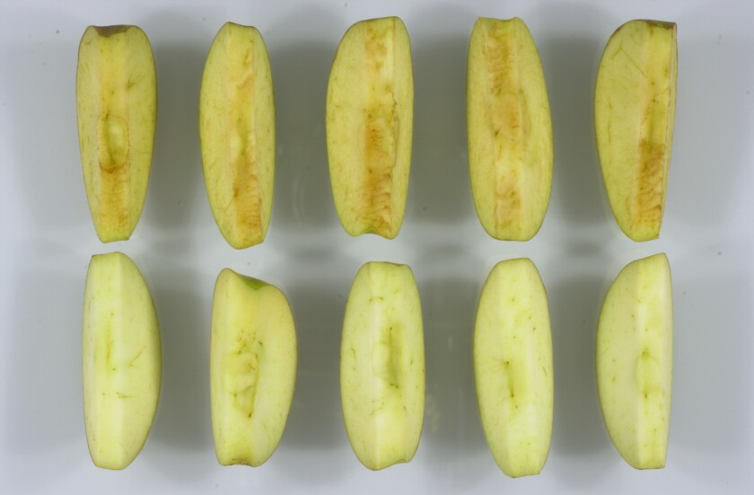 Genetically modified apple