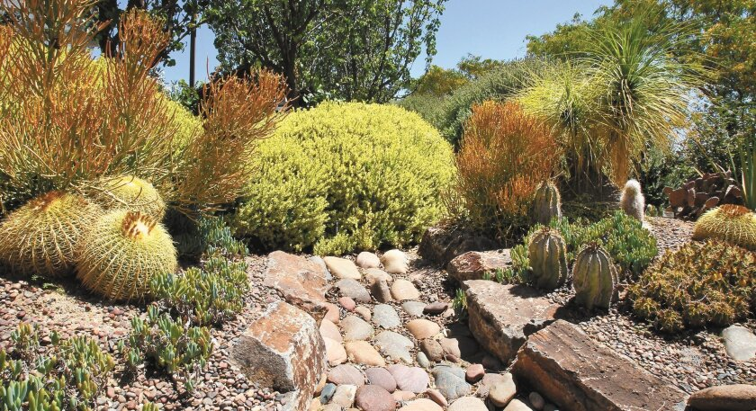 A detail view of plants that use very little water at the Water Conservation Garden in El Cajon.