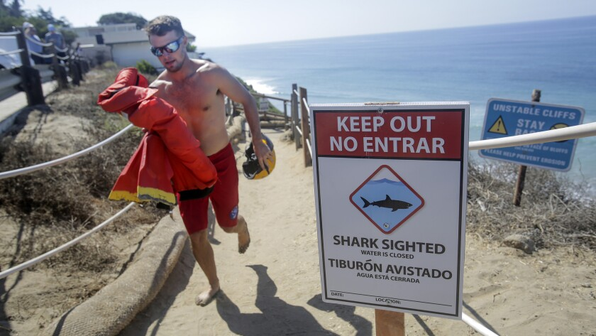 Encinitas senior lifeguard Max Wittmack runs up to the top of the bluff at Beacons Beach where a sign is displayed Saturday cautioning beachgoers that there had been a shark attack earlier in the day.