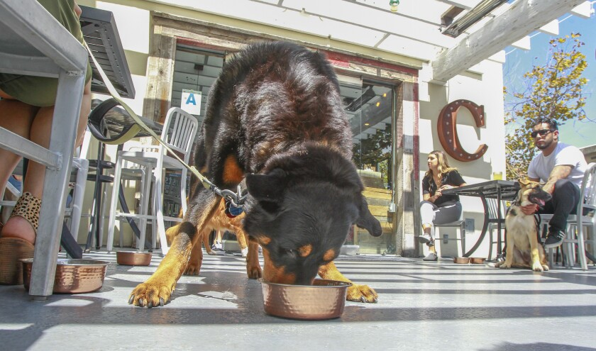 Tyson, a Rottweiler/Lab mix, enjoys the grilled salmon with basmati rice dish on the dog menu at The Compass gastropub in Carlsbad Village Faire center on Tuesday.