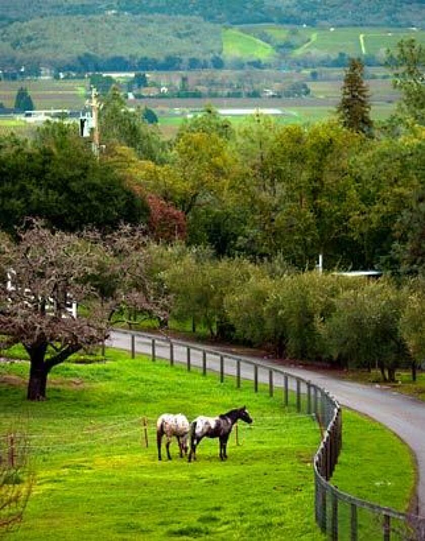 A glimpse at the pastoral setting of the Long Meadow Ranch Winery outside of Rutherford in the Napa Valley.