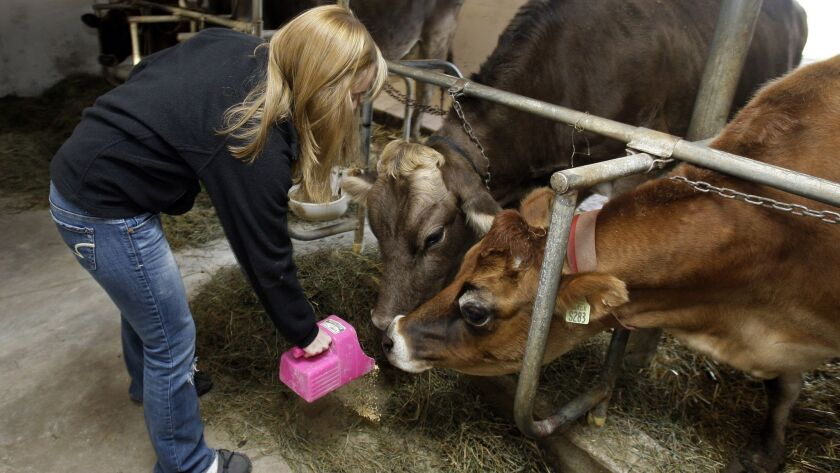 "A 14-year-old girl feeds cows on her family's dairy farm in Wisconsin in 2011. According to the Occupational Safety and Health Administration, ""youths of any age may work at any time in any job on a farm owned or operated by their parents."""