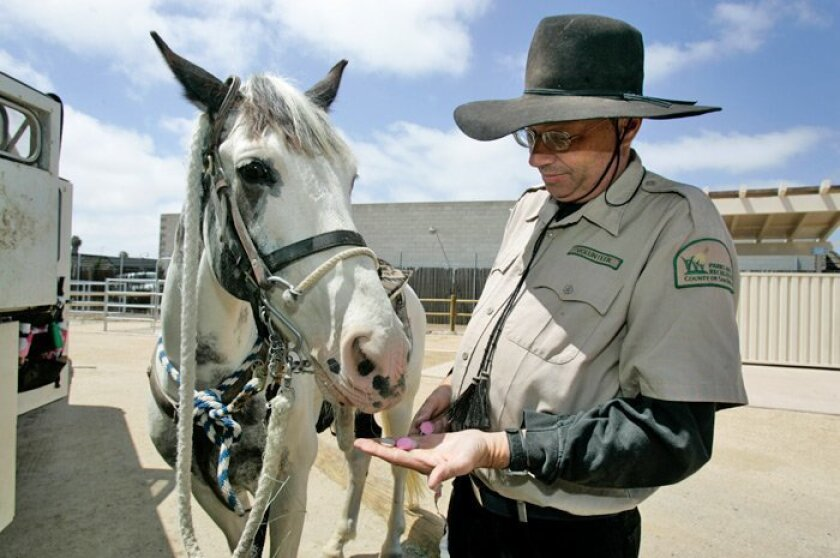 Doug Cruger feeds Bow Tie a handful of Necco wafers before taking to the trails at Otay Valley Regional Park. A new equestrian area has opened near the park, complete with parking spaces for horse trailers and a warm-up pen.