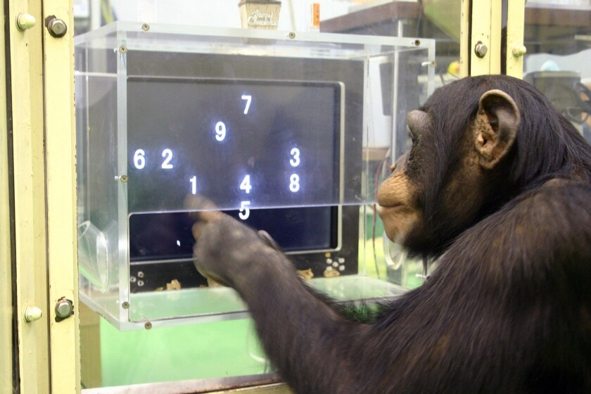 Chimpanzees outperform humans in game