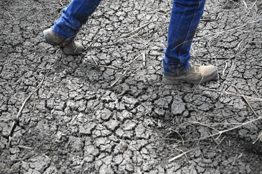 A rice farmer walks through a dried-up irrigation ditch in Richvale, Calif. Gov. Jerry Brown has defended farmers' rights to water.