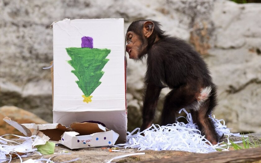 christmas gift wrapping at Australia zoo
