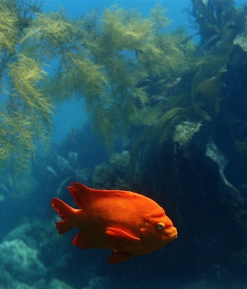 Climate change and ocean species