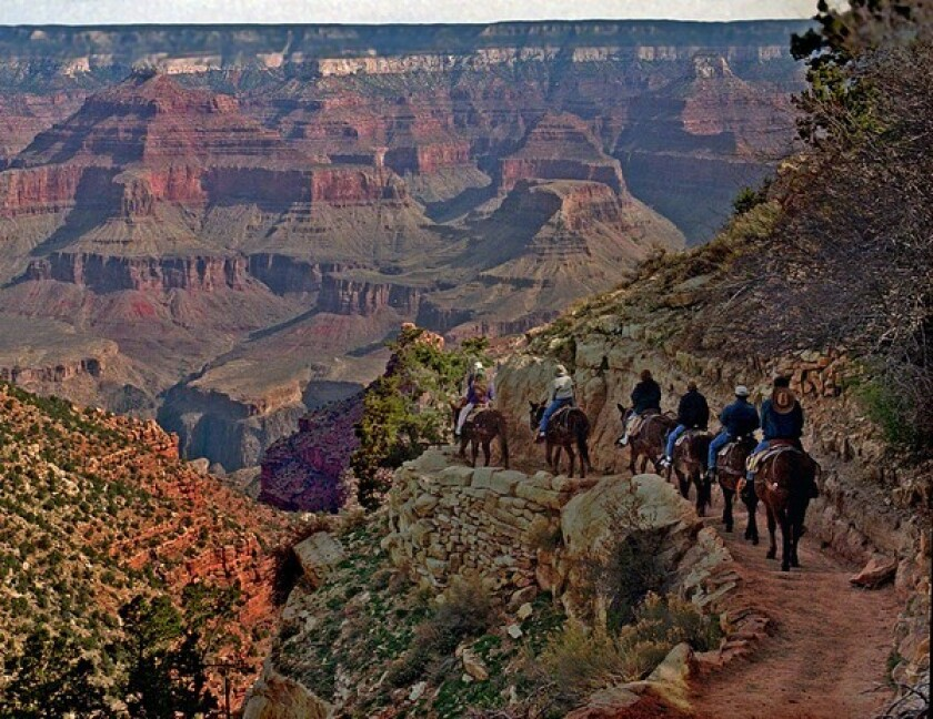 A mule train winds its way down the Bright Angel Trail.