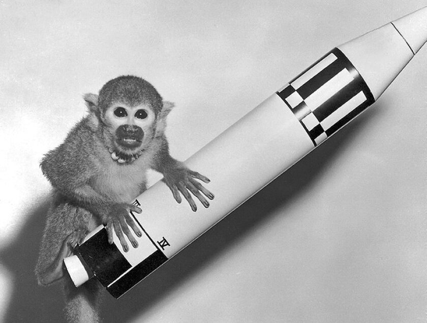 Baker the squirrel monkey sits atop a model of a Jupiter intermediate-range ballistic missile in this 1959 government publicity photo. Baker, along with co-passenger Able, a rhesus monkey, were the first experimental animals to be shot into space and recovered alive.