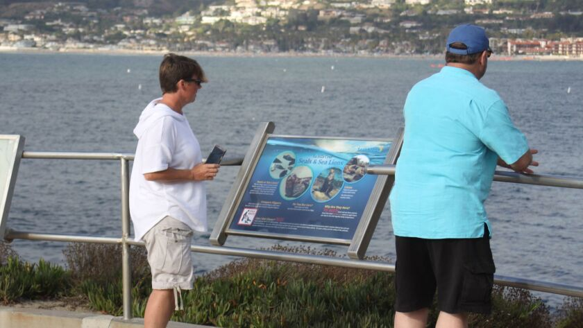 Cove-goers review sea lion information signage that has gone up as part of the City's public educati