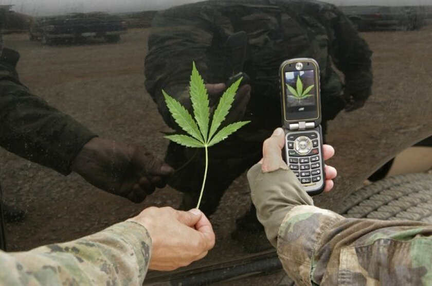 An undercover San Diego County N.T.F. officer displays the cell-phone photo he just took of a marijuana leaf held by another officer after they and others removed hundreds of the plants.