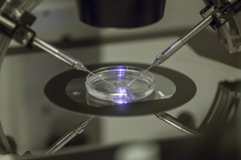 In vitro fertilization procedure