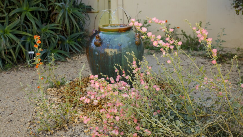 5 gorgeous 'no-fuss' plants that thrive on next to no water