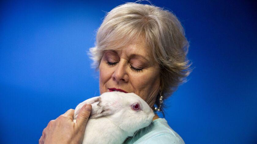Orlando Rabbit Care