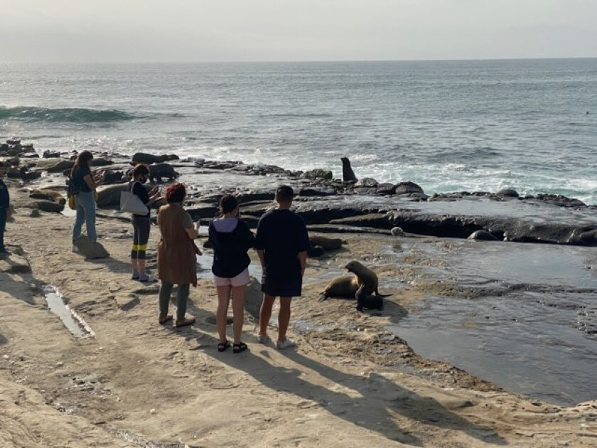Beach-goers gather to watch sea lions hauling out at Point La Jolla.
