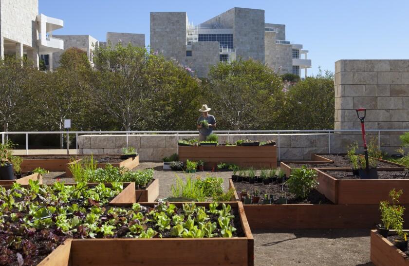 Julia Sherman's salad garden at the Getty Center