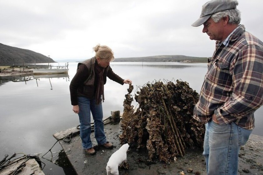 Oyster farm fight has many interested parties