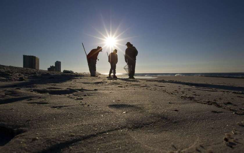 Cleanup crews search for oily tar balls along the beach in Gulf Shores, Ala.