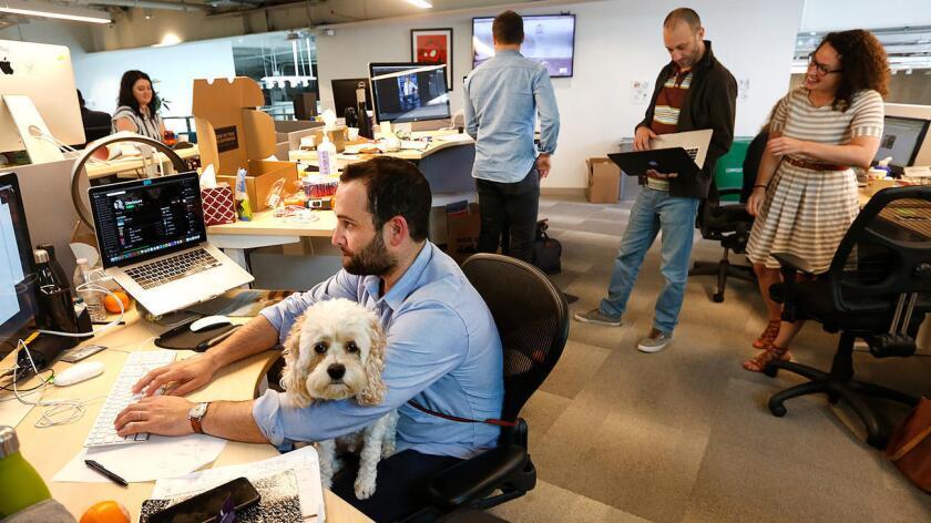 Alec Brownstein, el vicepresidente creativo de Dollar Shave Club, trabaja en su computadora con su perro, Ziggy, en su regazo, en la sede de la compañía, ubicada en Marina del Rey (Mel Melcon / Los Angeles Times).