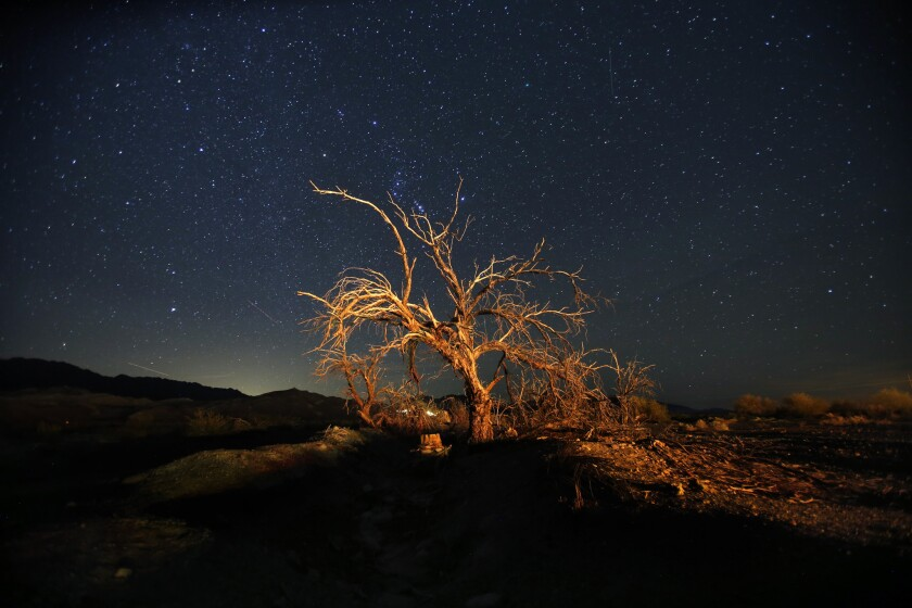 Stars shine in the night sky over a dead tree in Death Valley National Park.