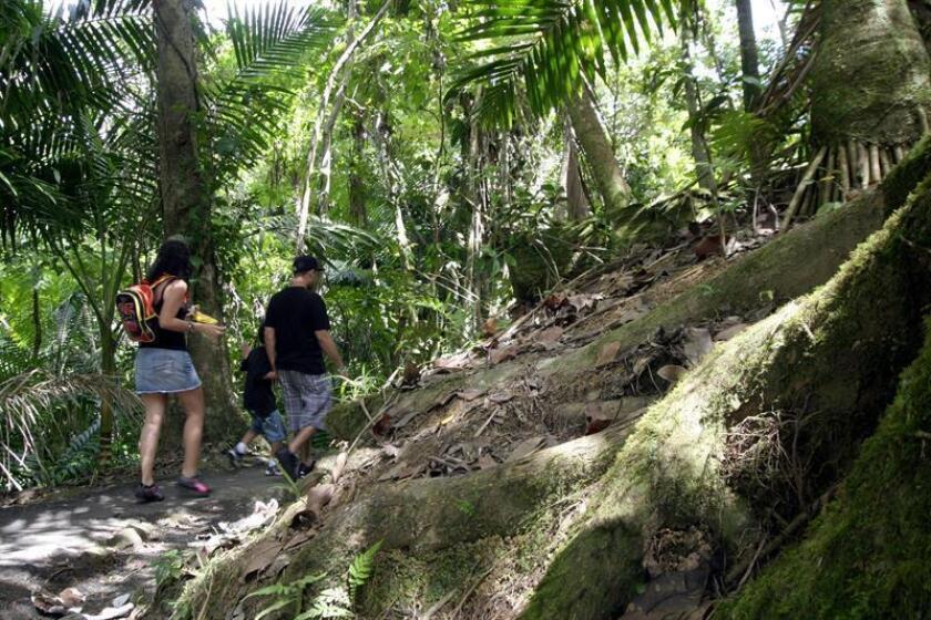 """Dos turistas españolas fueron atracadas este domingo por desconocidos cuando visitaban el bosque tropical """"El Yunque"""", en Río Grande, municipio al noreste de Puerto Rico, informó hoy la policía. EFE/Archivo"""