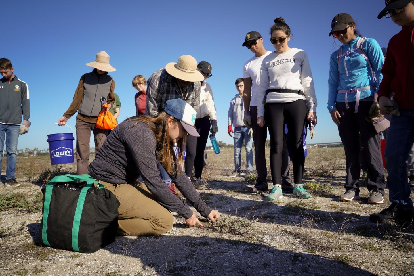 San Diego Audubon Society prep nesting area