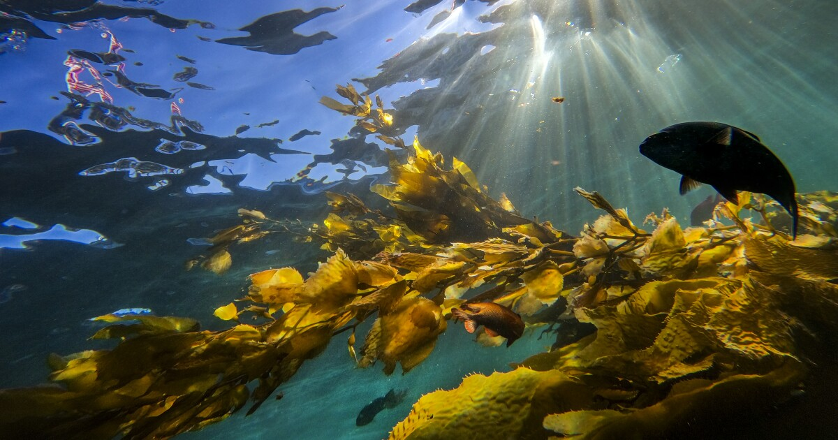 Newsletter: Essential California: A toxic undersea dumping ground