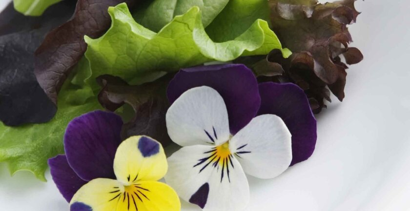Pansies and other violas are often used in drinks and salads.