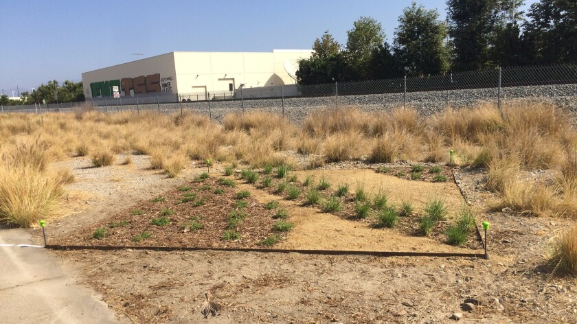 Mel Chin has offered his design to the public, so that others around Los Angeles can plant the same garden in their yards.