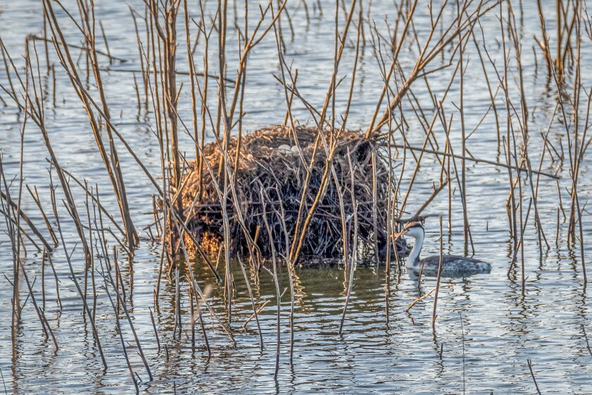 Nest out of water