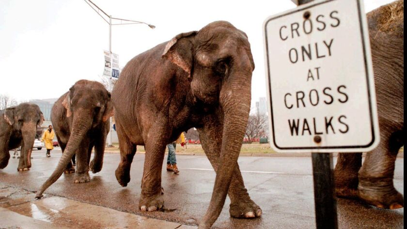 Ringling Brothers Circus workers ushers a line of elephants through downtown Huntsville, Ala., Wedne