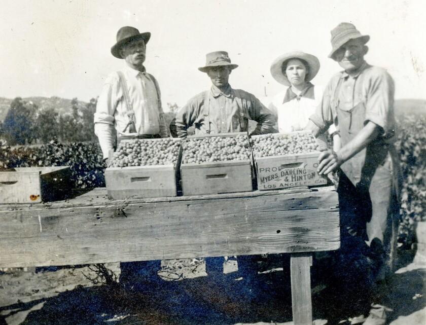 Packing grapes in 1918 — E.G. Flint, Elrie Stotler, Hester Flint and Charlie Clark.