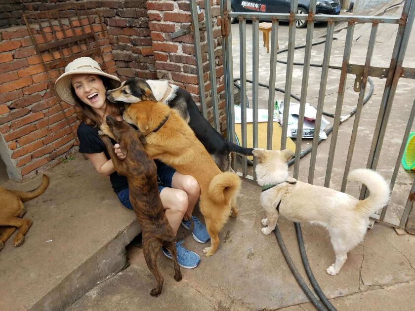 Valarie Ianiello plays with dogs rescued on trips to China