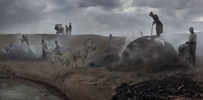 """Charcoal Burning With Zebras"""