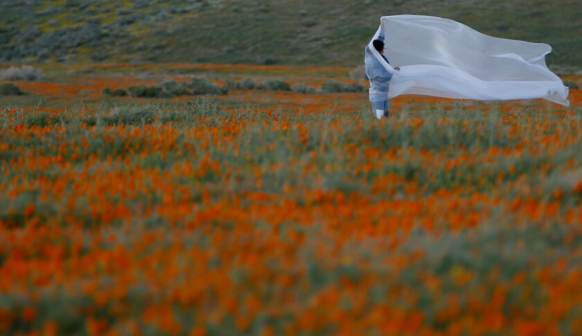 People walk through the Antelope Valley California Poppy Reserve in Lancaster at dusk.