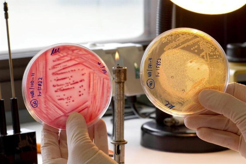 """Una investigadora analiza muestras de vegetales tras la alerta sanitaria del brote de la bacteria """"E. coli"""". EFE/Archivo"""