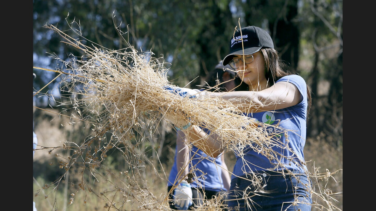 Photo Gallery: Volunteers remove invasive plant species during the Nestle and SCA Habitat Restoration Project at Debs Park in Los Angeles